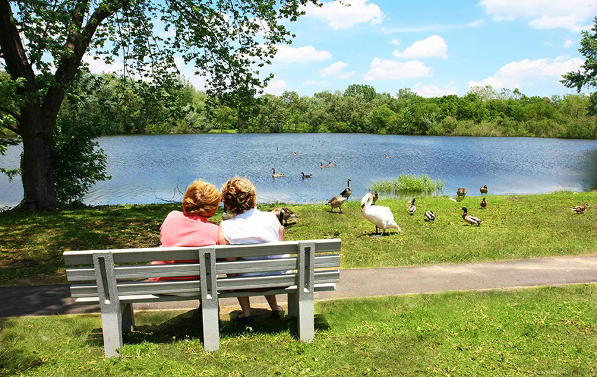 American Village independent living pond and swans